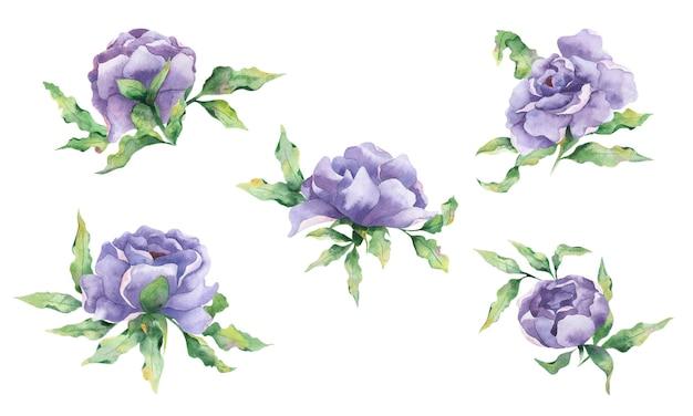 Akwarelowy zestaw kwiatów z dużymi liliowymi kwiatami piwonii i liści na białym tle