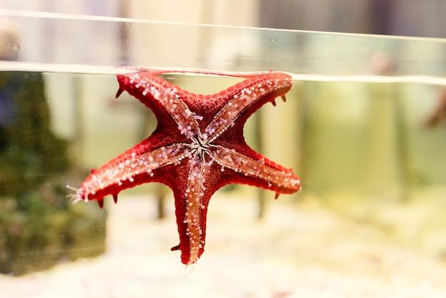Akwaria z rozgwiazdami w oceanarium, ryby pod wodą