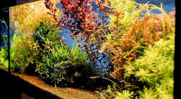 Akwaria z rybami w oceanarium, ryby podwodne