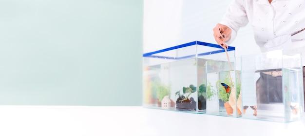 Akwarium dla zwierząt domowych i hobbystycznych w domu. łowienie ryb do nowej miski.