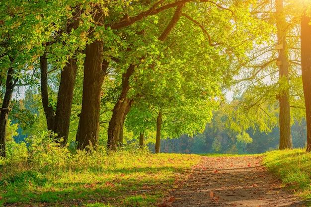 Aleja jesiennego parku sezon jesień wrzesień październik listopad a