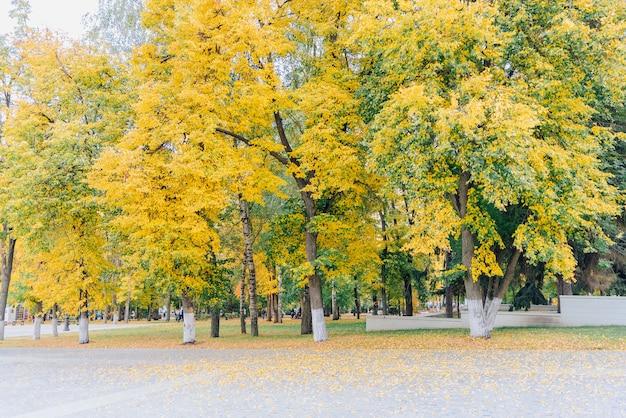 Aleja w jesieni park ze ścieżką z kostki brukowej