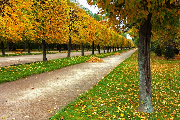 Aleja w parku z polem pokrytym jesiennymi liśćmi
