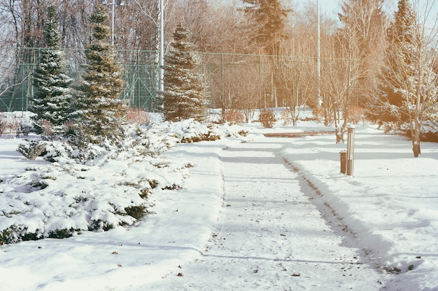 Aleja w pięknym parku w zimowy dzień