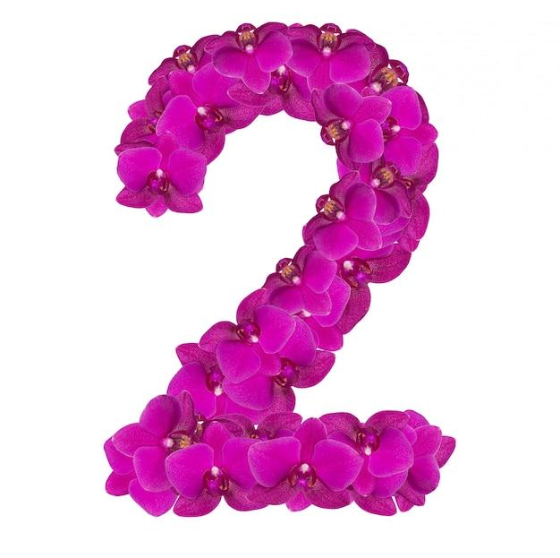 Alfabet numer dwa z kwiatów orchidei na białym tle