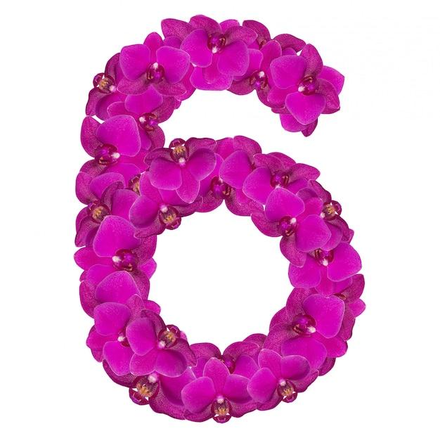 Alfabet sześć z kwiatów orchidei na białym tle