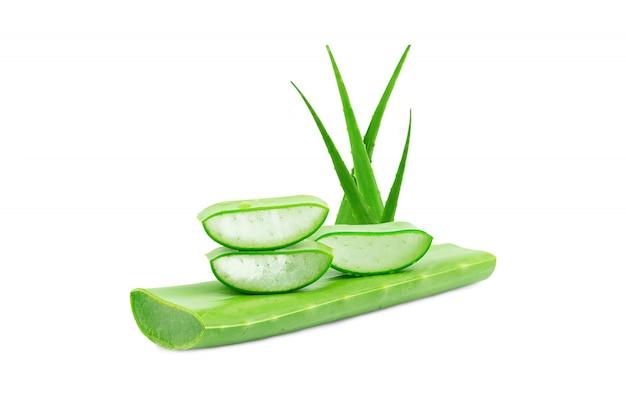Aloe vera fresh isolated. bardzo przydatny lek ziołowy do pielęgnacji skóry i włosów.