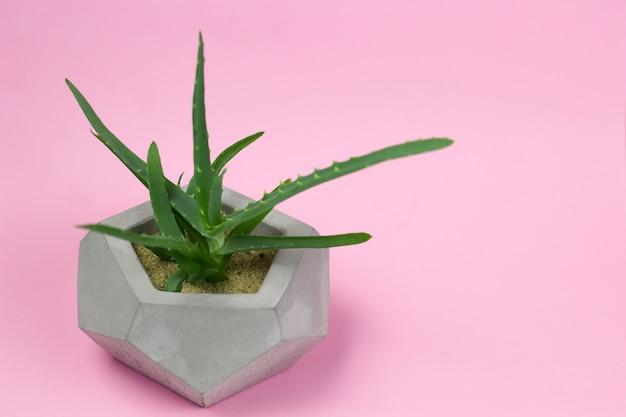 Aloesu vera soczystego betonowego garnka jaskrawy tło