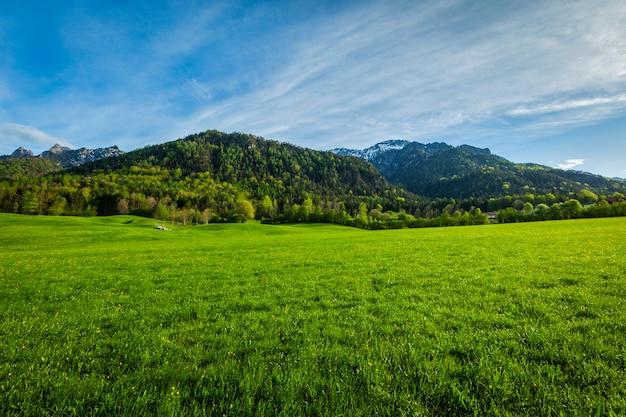 Alpejska łąka w bavaria, niemcy
