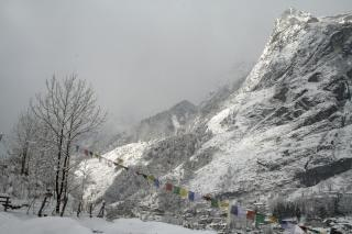 Alpejski widok drzewa