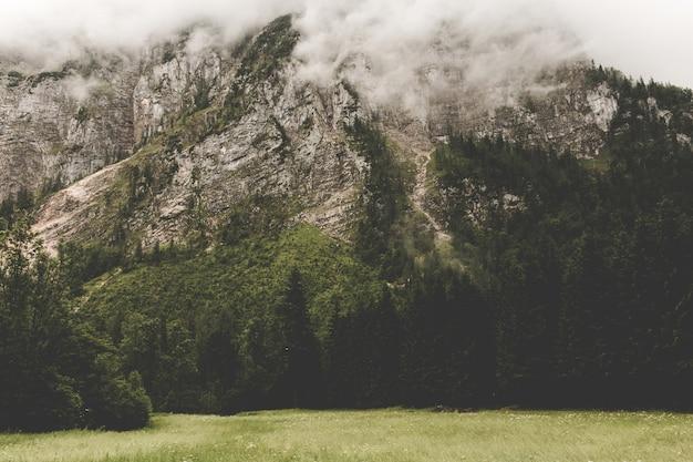 Alpejskie góry i ściana głębokiego zielonego lasu. spacer w letni dzień w mieście hallstatt, austria