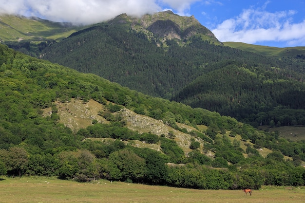 Alpejskie pastwisko w lesie dla koni