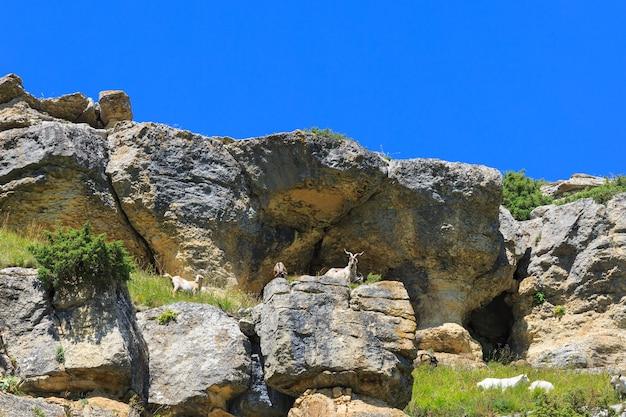Alpejskie pastwisko w lesie dla owiec i baranów