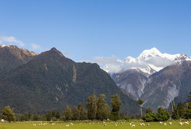 Alpy południowe dwa wierzchowce na jednym zdjęciu mount cook i mount tasman south island nowa zelandia