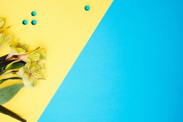 Alstroemeria kwiaty na kolorowym tle papieru. miejsce na tekst