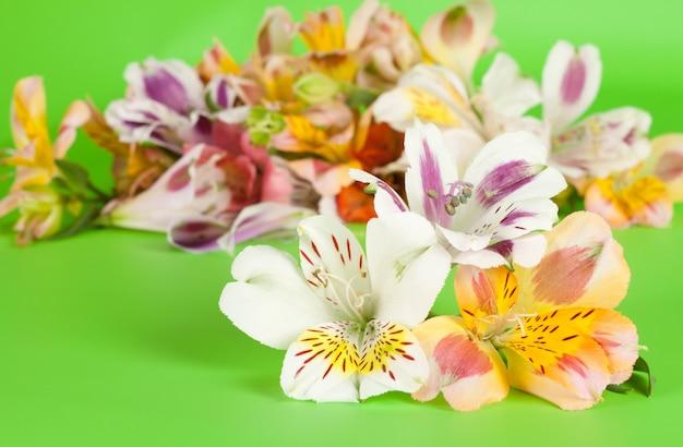 Alstromerii kwitnie na zielonym tle