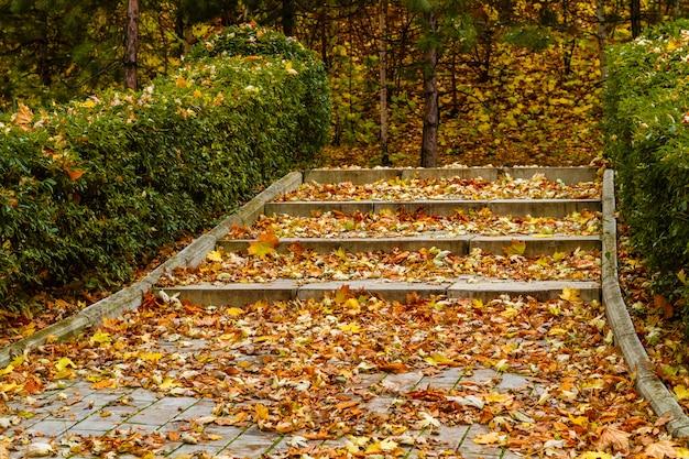 Altanka w parku jesienią