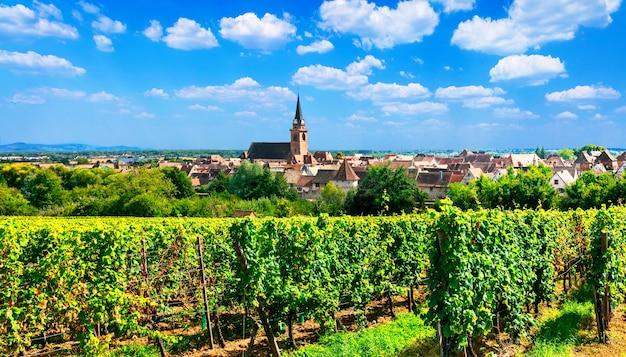 Alzacja we francji, słynny region winiarski, malownicze wioski z winnicami.