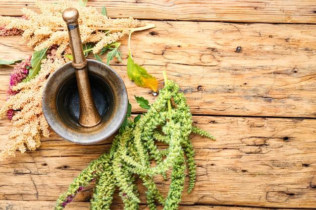 Amarant i ziołolecznictwo
