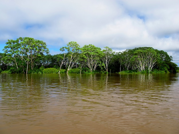 Amazonka w peru, ameryka południowa