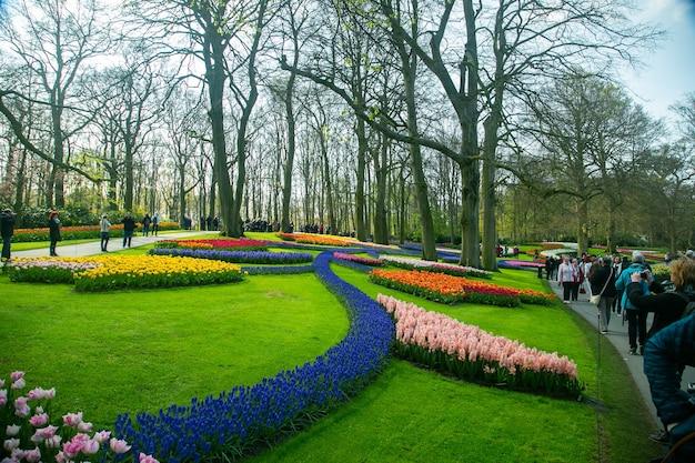 Amsterdam, holandia-20 kwietnia 2018: keukenhof ogród piękny kwiatowy w holandii whtere co roku dostosować kwiat w ogrodzie.