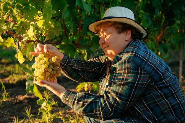 Analiza uprawy winorośli kobieta farmerka w kapeluszu sprawdza jakość gron...