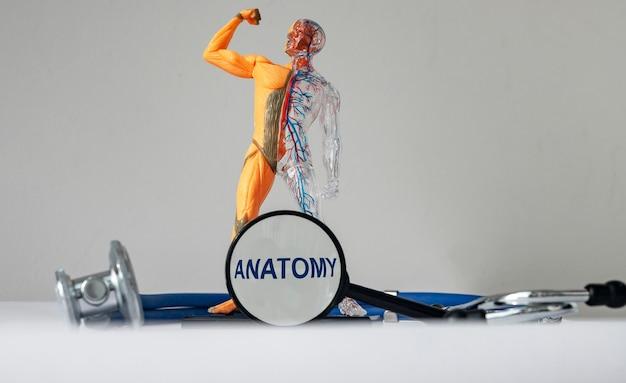 Anatomia studiująca słowo koncepcyjne przez szkło powiększające