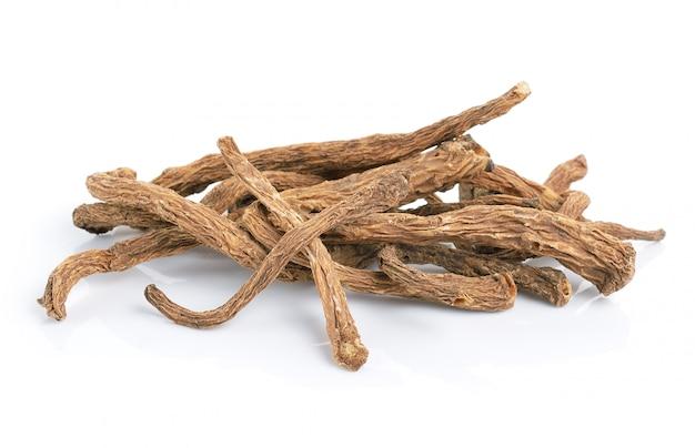 Angelica sinensis zioło na białej przestrzeni