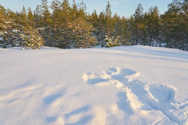 Anioł śniegu w lesie zimą w słoneczny dzień