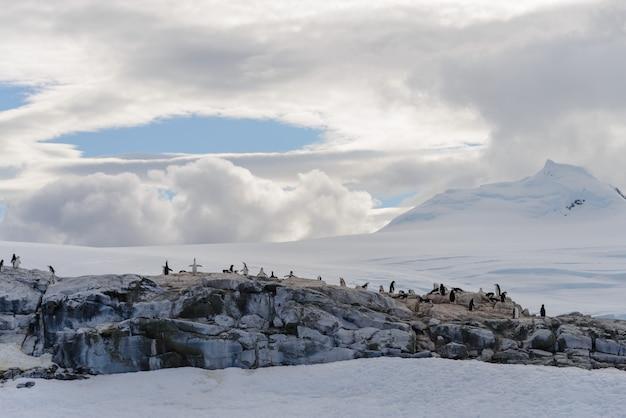 Antarktyczny krajobraz z pingwinami