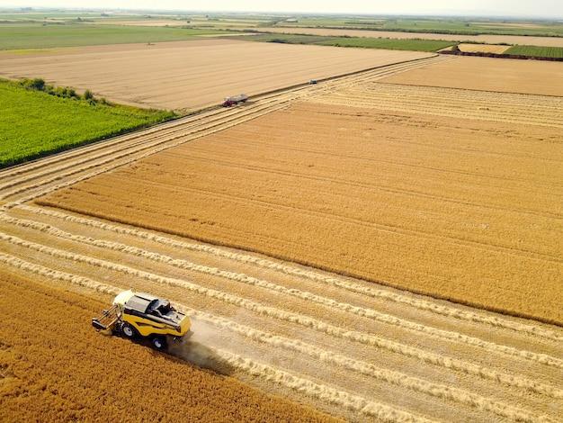 Antena strzelał żółty żniwiarz pracuje na pszenicznym polu.