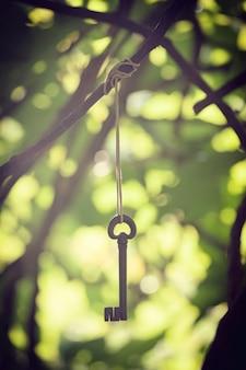 Antyczny kutego żelaza klucz wiesza między gałąź.