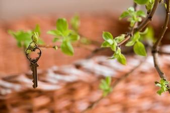 Antyczny rocznika klucz na gałąź, zieleni młodzi liście. wizja wiosenna i letnia