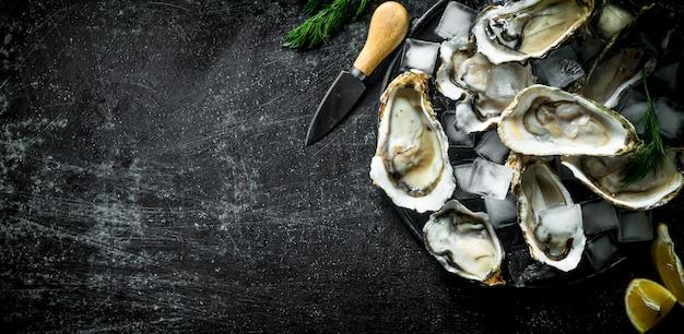 Apetyczne surowe ostrygi z kostkami lodu i nożem. na ciemnym tle rustykalnym