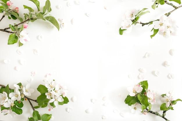 Appletree kwiaty na białym tle