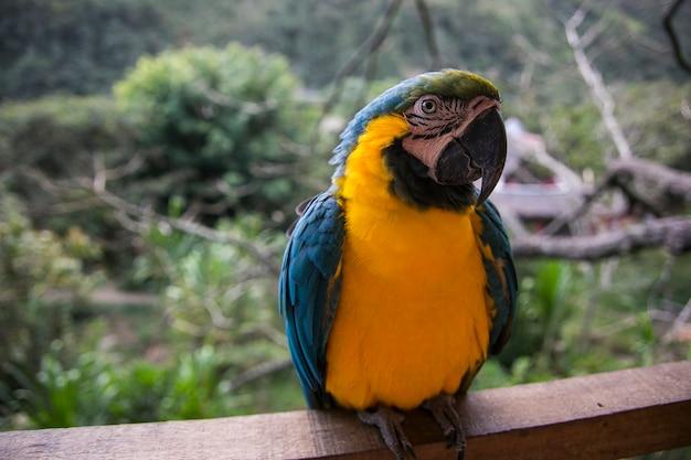 Ara wystawiona na żółto w dżungli