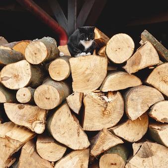Aranżacja z ciętym drewnem i czarnym kotem