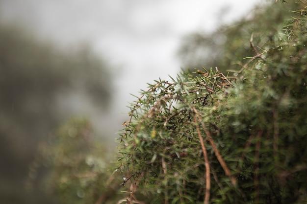 Aranżacja z piękną roślinnością