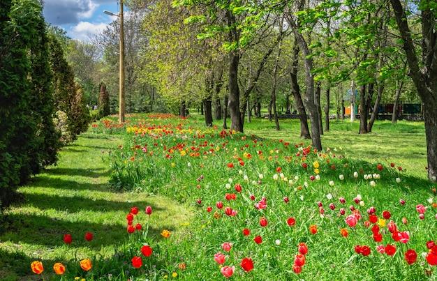 Arboretum kropywnyckiego w parku miejskim w słoneczny wiosenny dzień