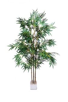 Areca palma odizolowywająca na białym tle