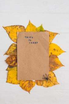 Arkusz papieru umieszczony na liściach w pobliżu pająka