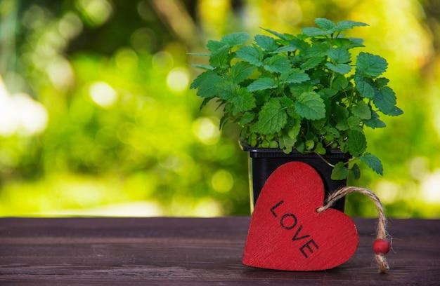 Aromatyczna mięta na drewnianym stole. młode gałązki mięty na zielonym tle niewyraźne i czerwone drewniane serce. skopiuj miejsce