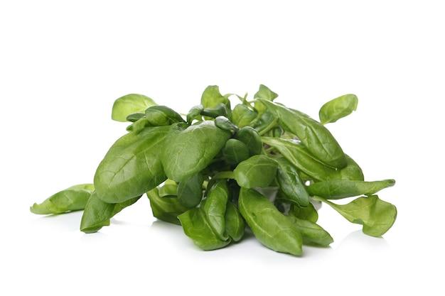 Aromatyczne zioła na białej powierzchni