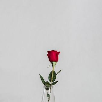 Artystyczne zdjęcie pięknej róży