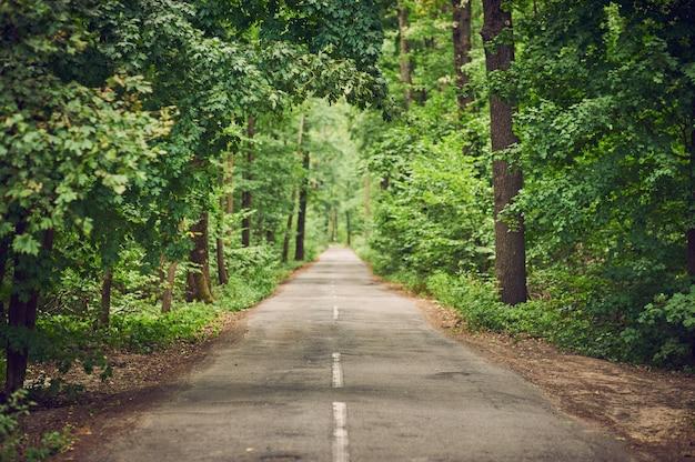 Asfalt pusta droga w zielonym lato lesie