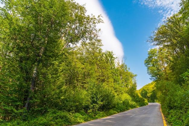 Asfaltowa droga w zielonym letnim lesie