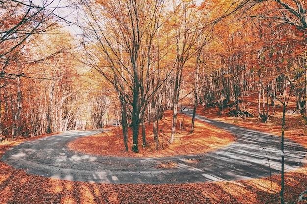 Asfaltowa droga wije się jak serpentyna w pięknym jesiennym lesie