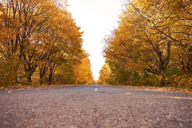 Asfaltowa droga wśród żółtych jesieni drzew. jesienny krajobraz.