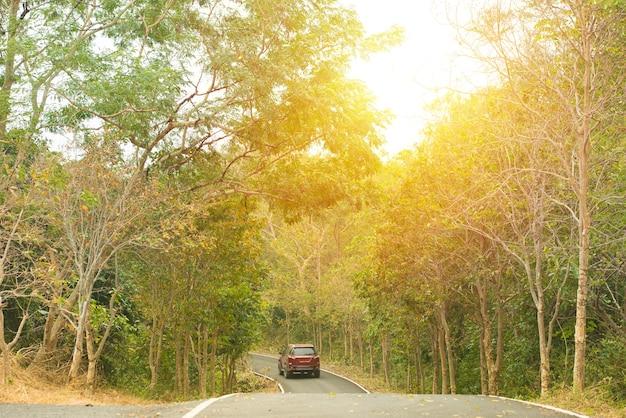 Asfaltowa kręta droga krzywa w bukowym lesie i czerwony samochód na drodze.