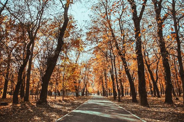Asfaltowa ścieżka przez jesienny park miejski wśród drzew